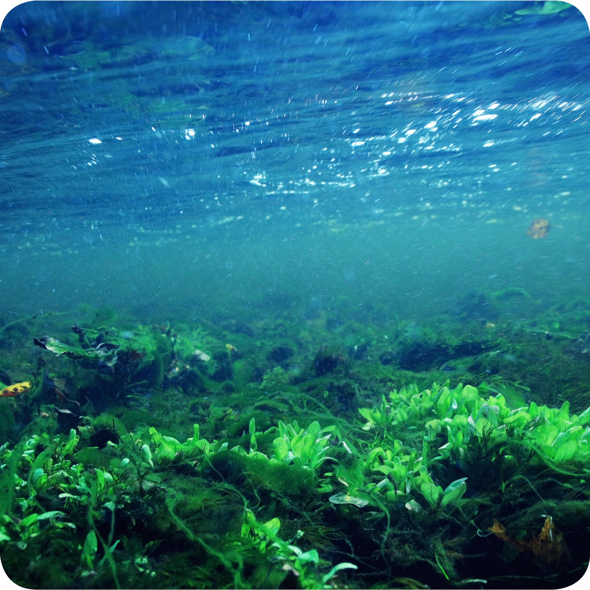 A lush ocean habitat, which is a prime location for blue-green algae growth.