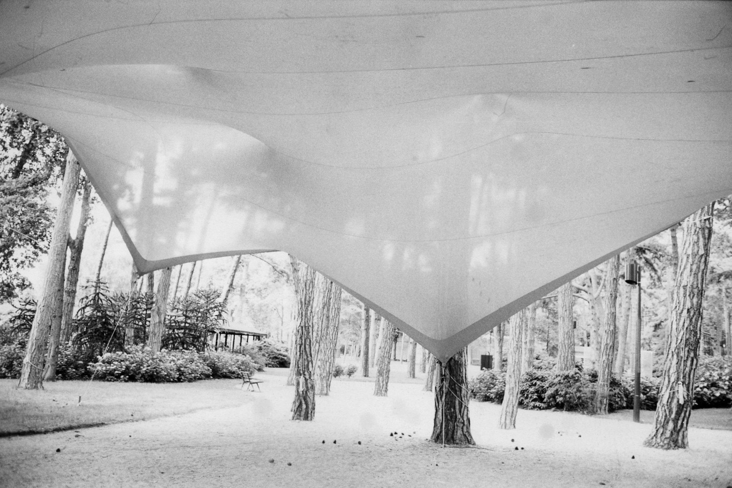 Canopy.jpg
