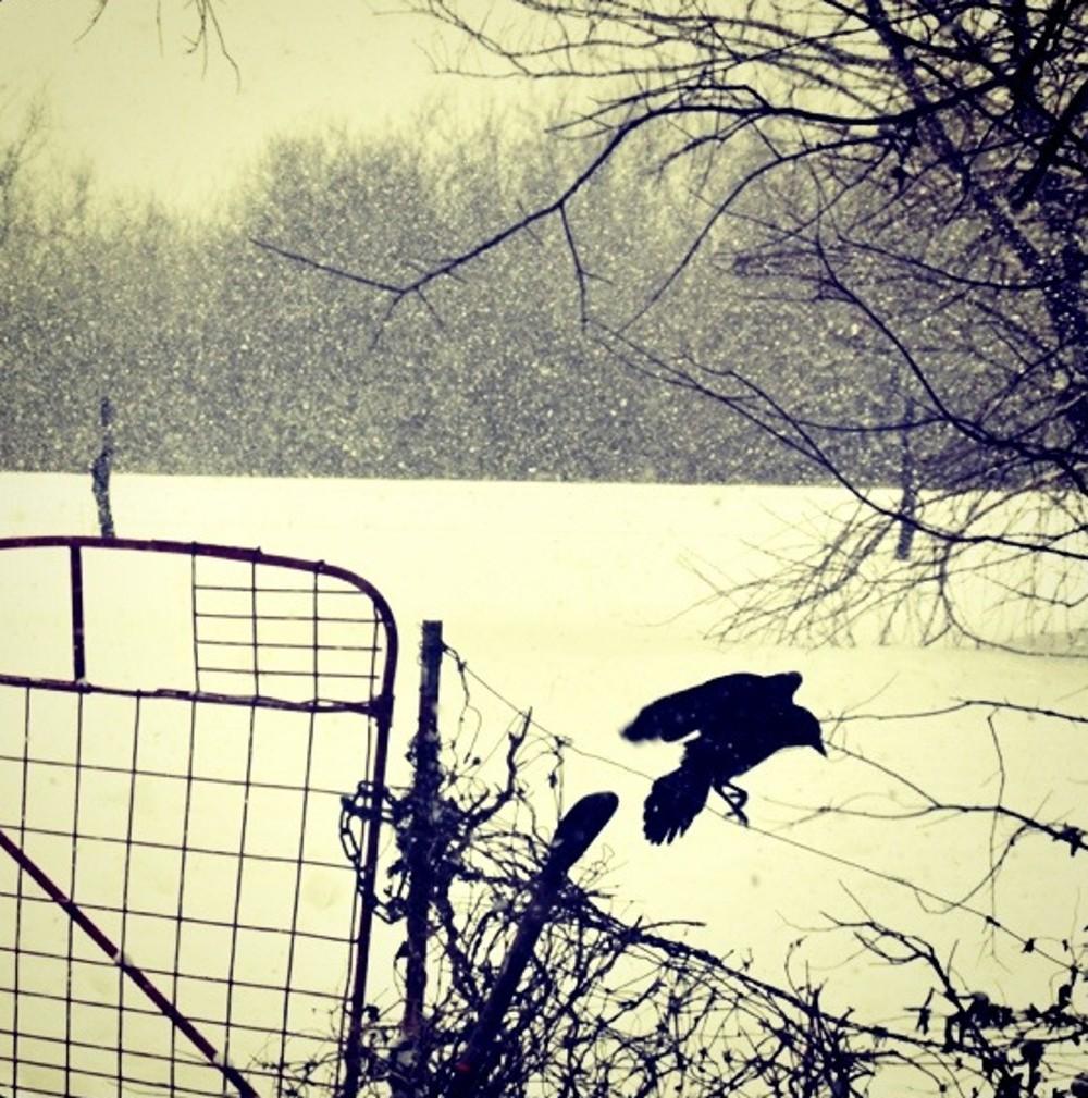 Christine Brown-As the Crow Flies.jpg