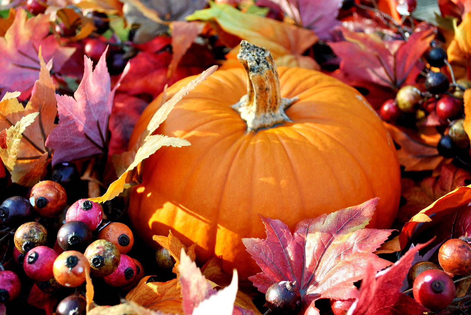 bigstock-Thanksgiving-Pumpkin-49944248.jpg