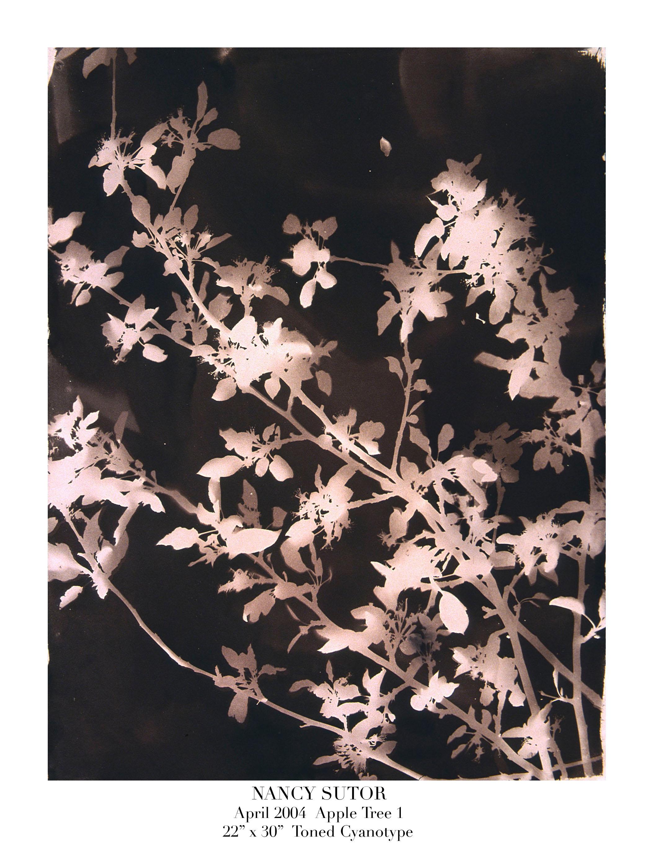 (1) #1A Apple Tree 1.jpg