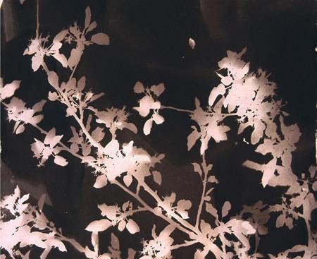 Nancy Sutor's Absence/Presence - Accompanied by Elizabeth Brown's Delicate ReciprocityJanuary 13th - February 25th
