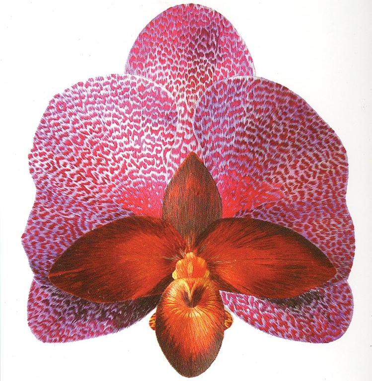 Antje Manser's Botanicals - Accompanied by Mykl Ruffino's New WorksApril 8th - May 28th