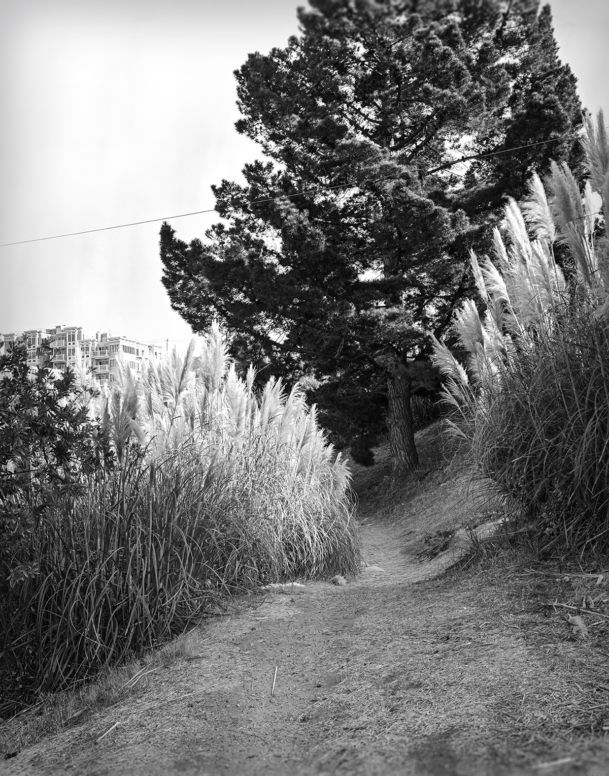 Portrero Hill Path