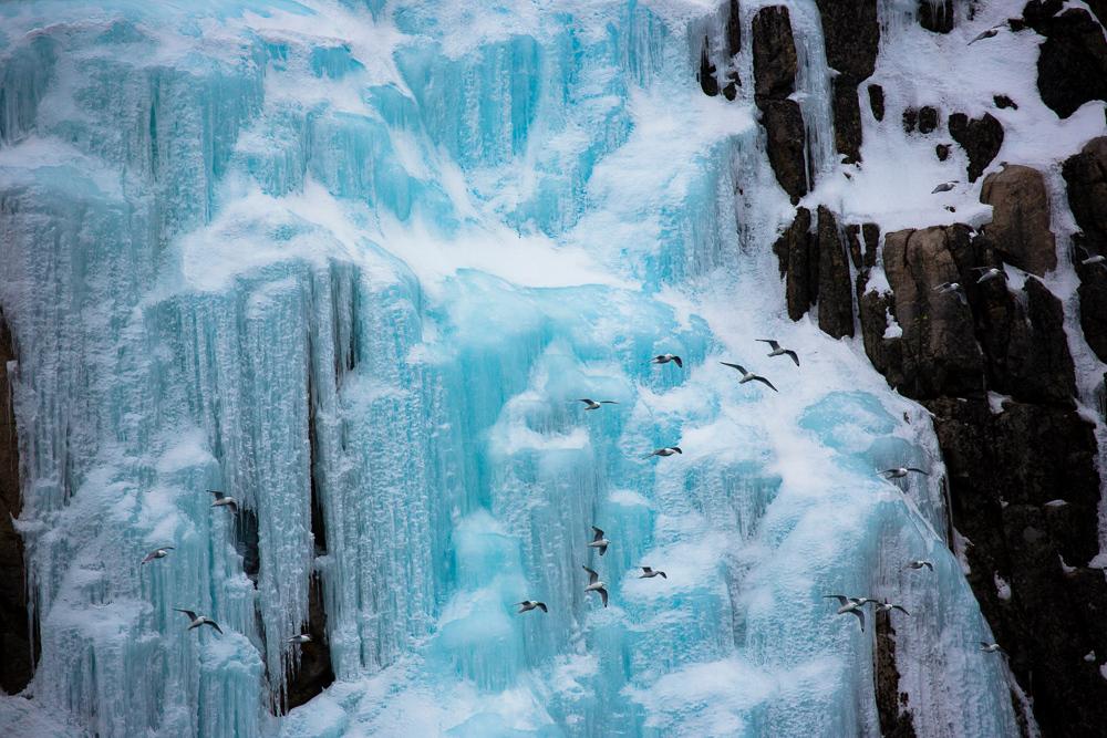 Greenland-ski-1.jpg