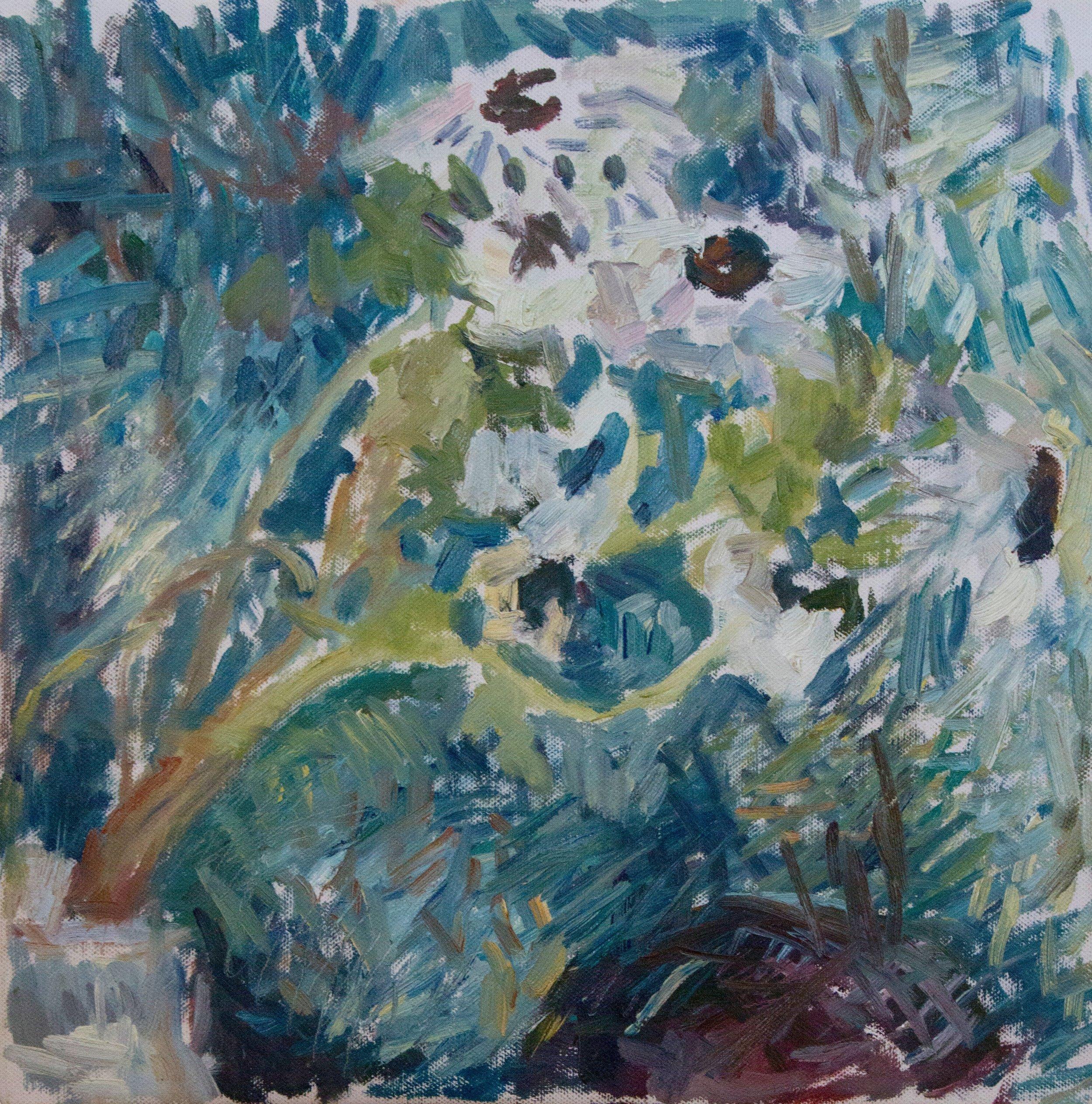 "Daisies , oil on canvas, 15"" x 15"", 2018"