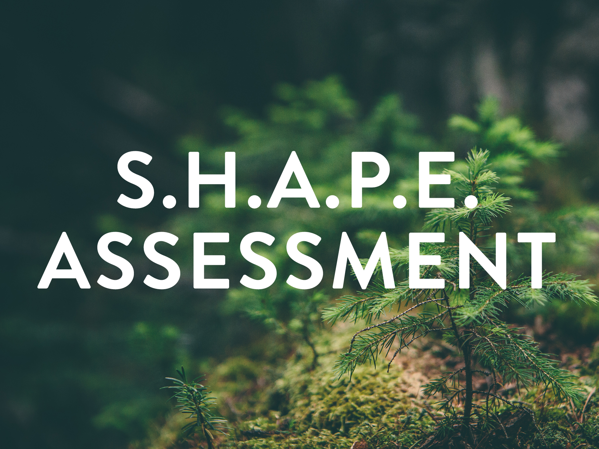 shape assessment.jpg