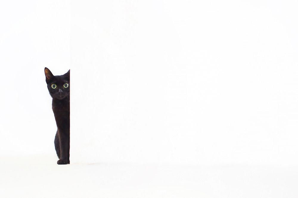 We Specialize in Experiential Marketing, Art Installations & Creating Brand Content. - ~Meow