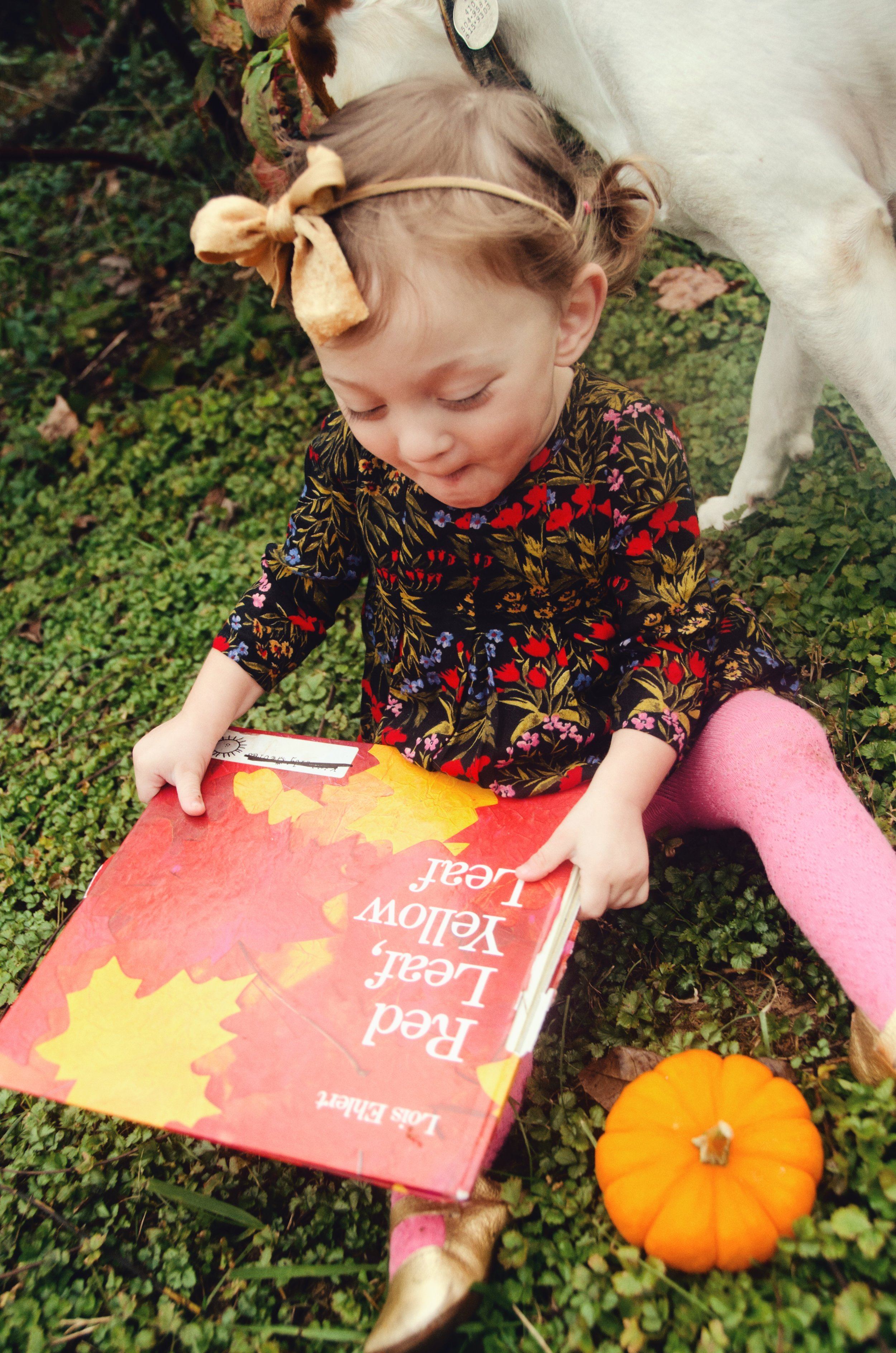 fall books - shegotguts.com