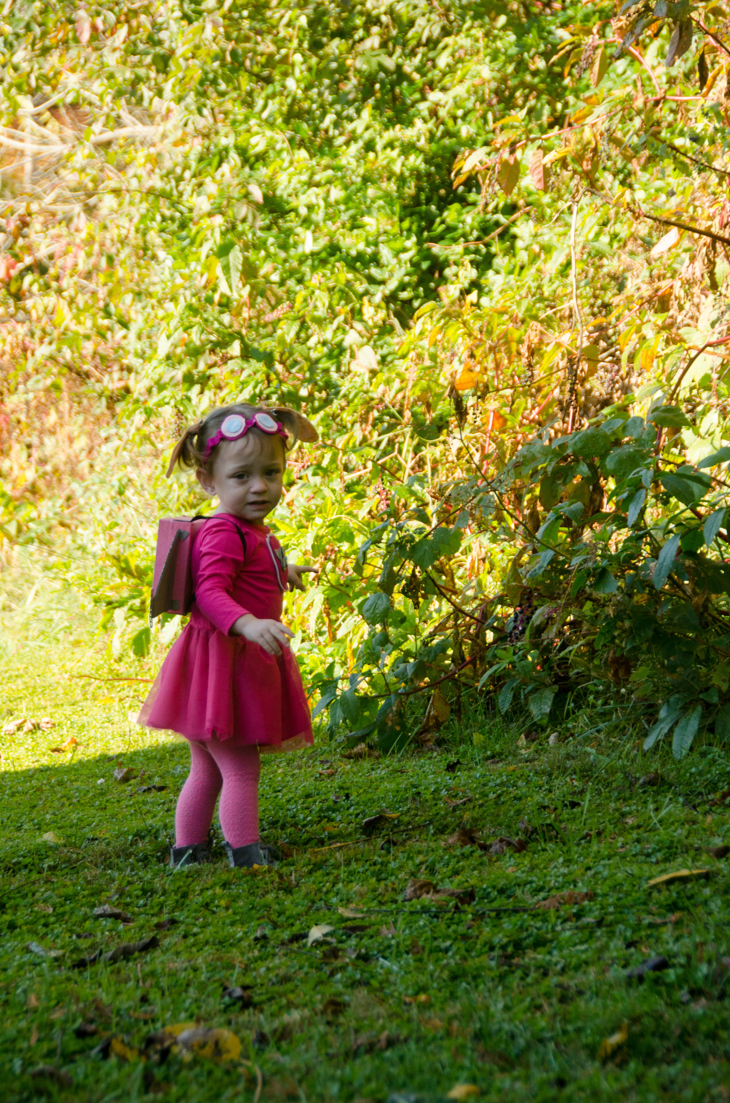 addie belle - 2 years old - october 2017 - shegotguts.com-5.jpg