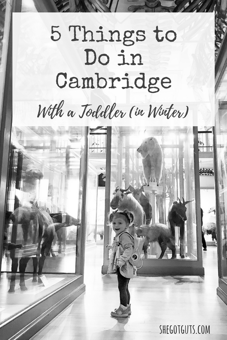 traveling to cambridge with a toddler - shegotguts.com