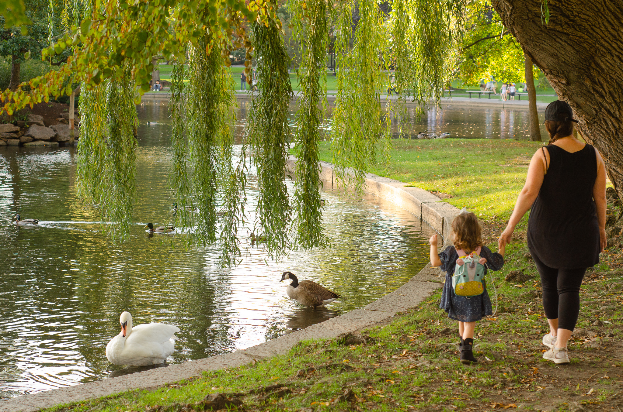 guide to visiting boston common and public gardens - she got guts