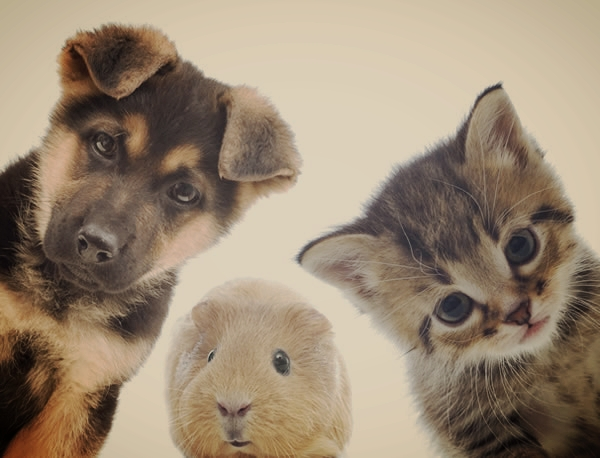 Reiki My Animals - Nurture and give back to the amazing animal companions in your life...