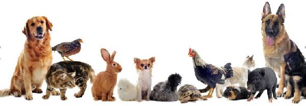 a_animals.jpg
