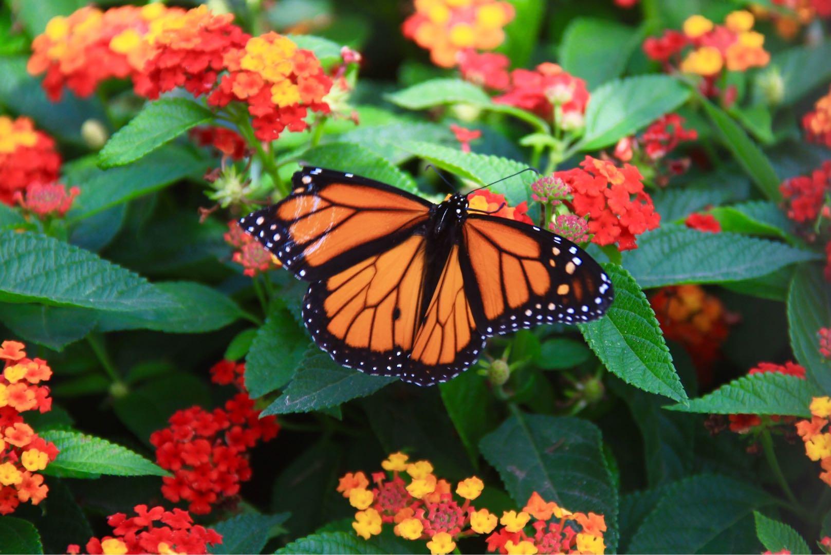 Butterfly; Sharon Zhou