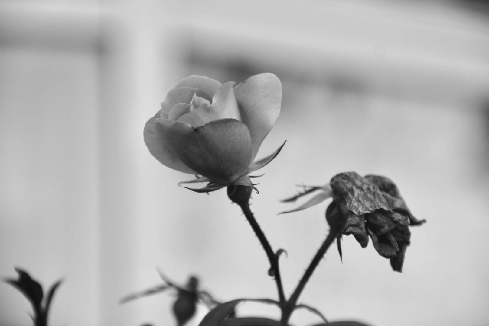Flower; Sharon Zhou
