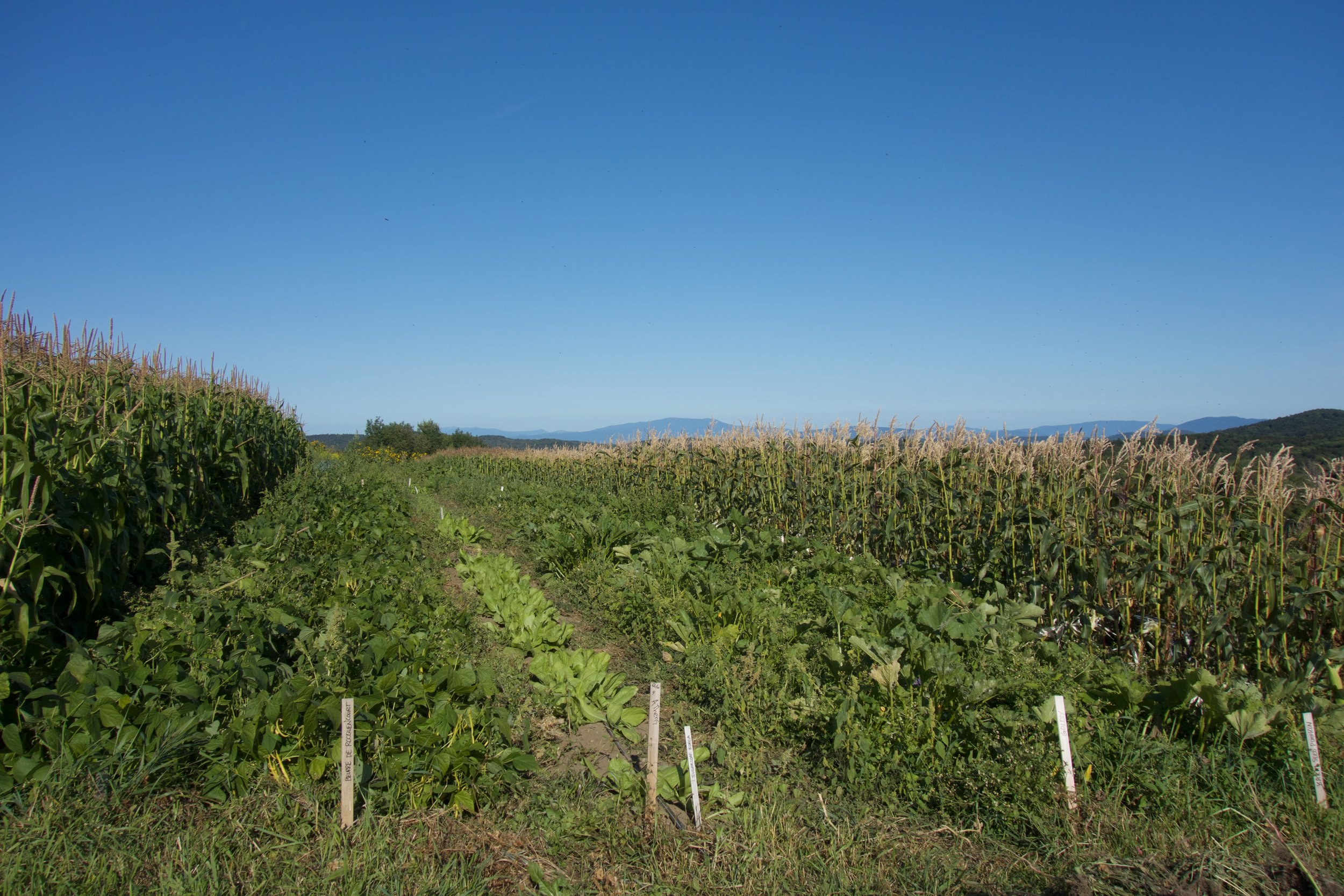 Mountain School Farm; Ariane Desrosiers; Milton Academy