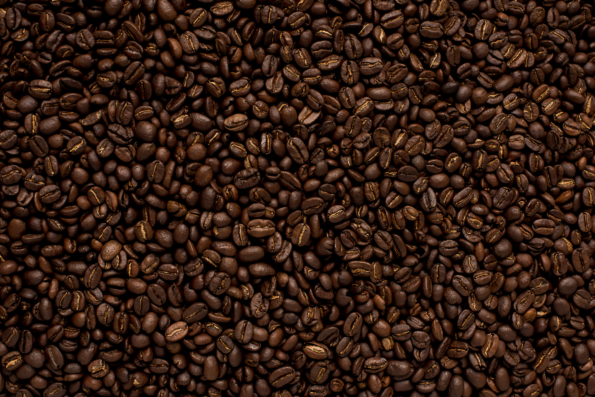 Java Jerry - Freshly Roasted Coffee Beans from java Jerry's