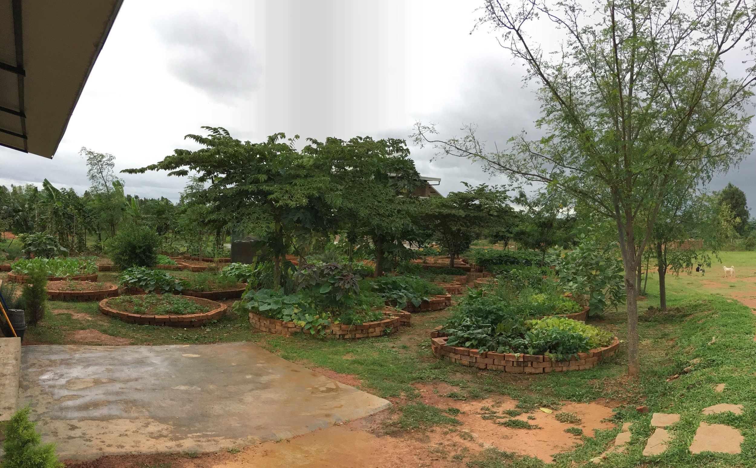 The vegetable garden at Perma Farm with interior trees (in this case Singapore Cherry) shading and protecting the raised beds, and windbreaks on three sides with Drumstick, Gliricidia, Pigeon Pea and Bananas.