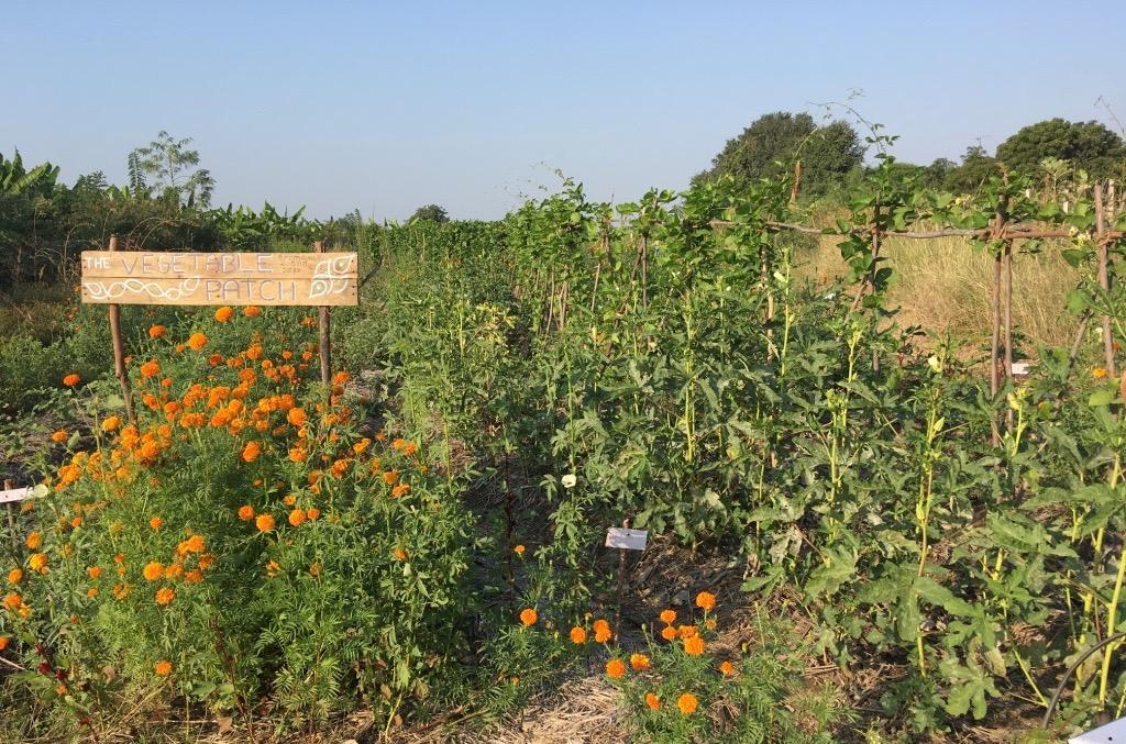 A vegetable garden at Polam Farm, Telangana