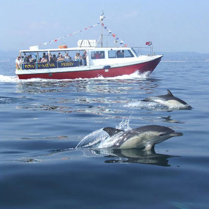 Bessie with common dolphins