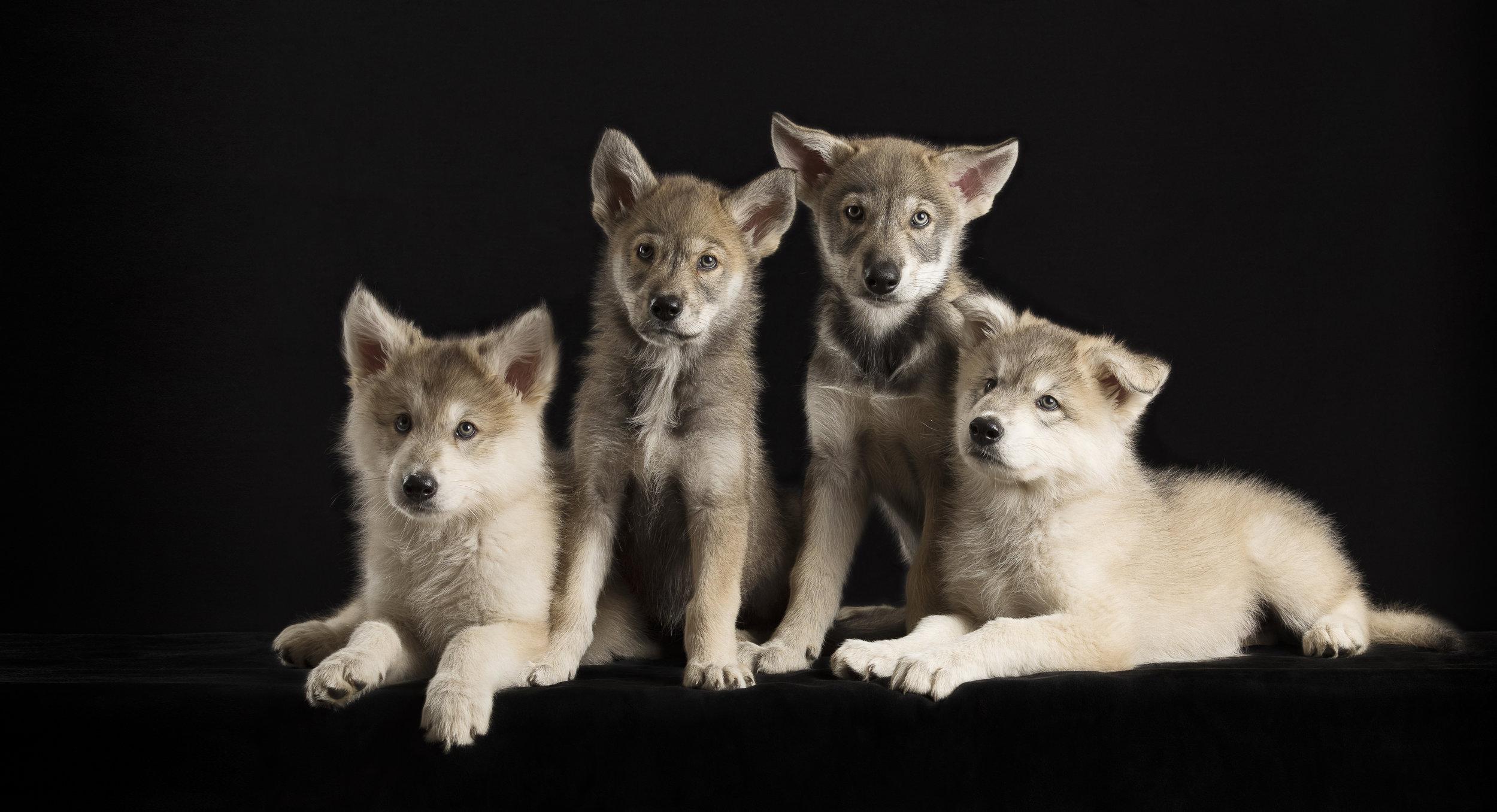 PuppiesExtended.jpg