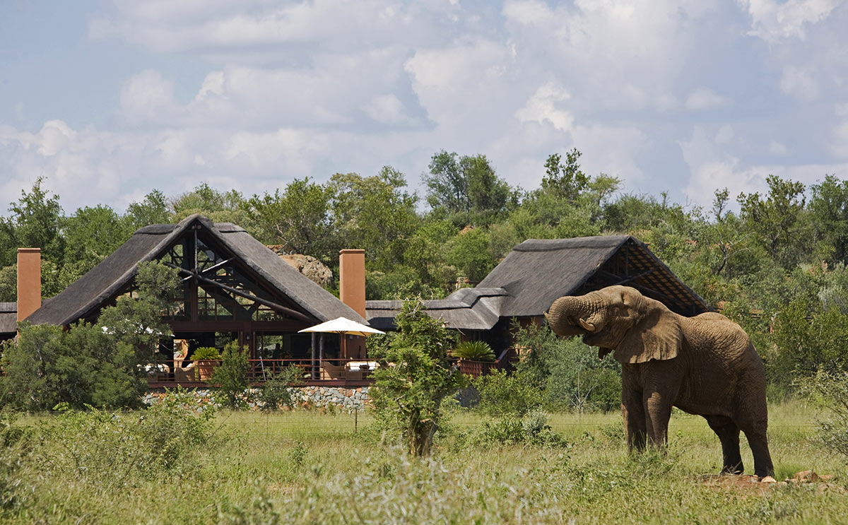 Mateya-Safari-Lodge_Exterior---Elephant.jpg