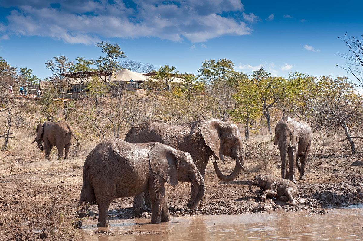 The-Elephant-Camp_Elephants.jpg