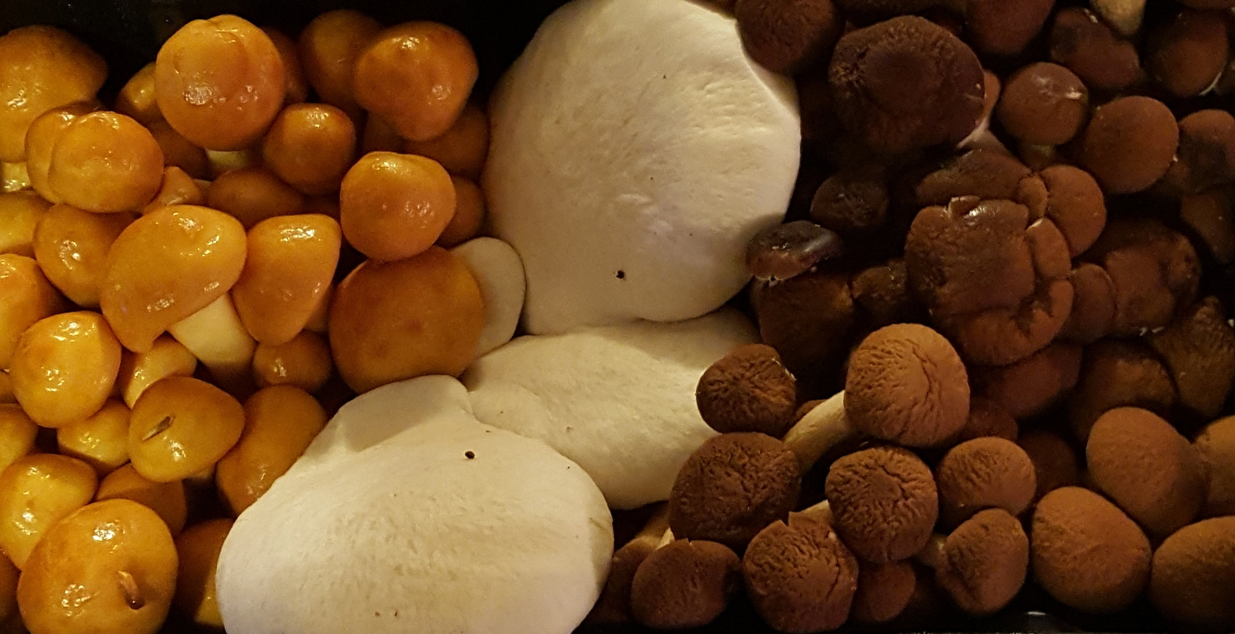 I found this assortment of mixed mushrooms at Whole Foods OKC
