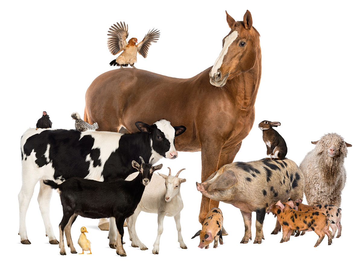 Livestock Bedding