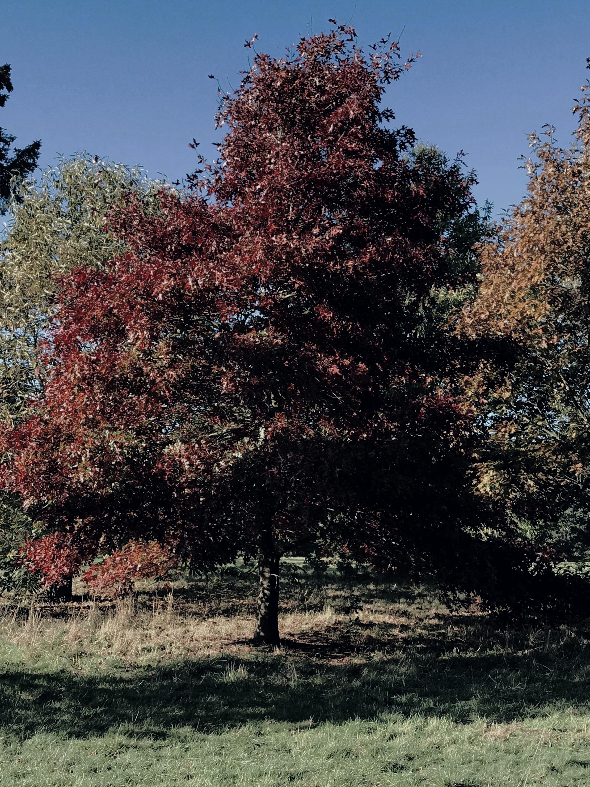 hug a tree in autumn