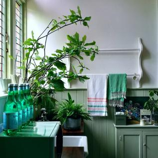 Nature's hues of greens and blues