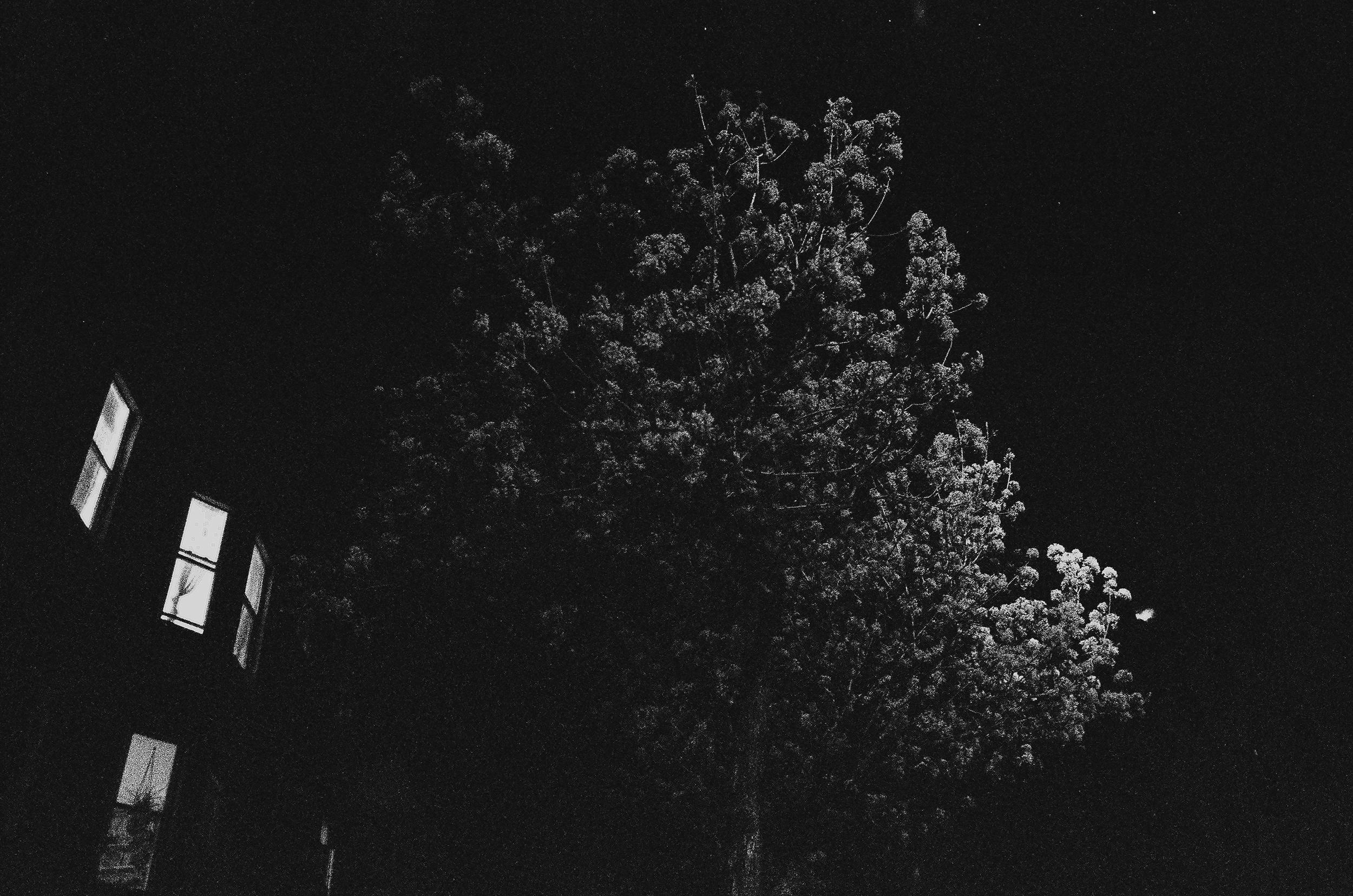 brooklyn tree.jpg