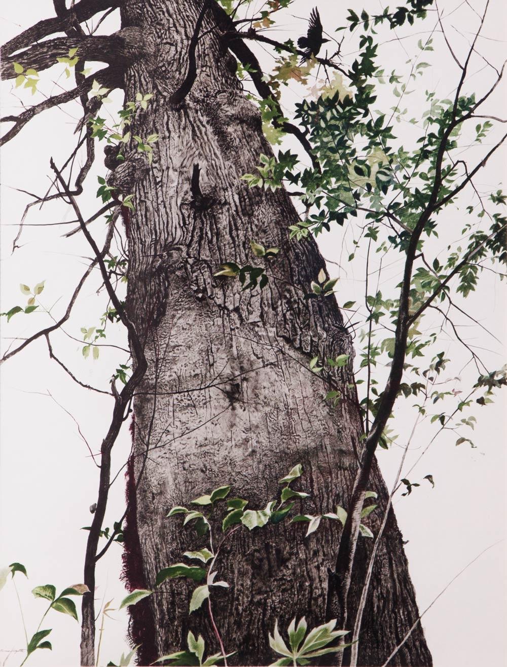wyeth-2.jpg