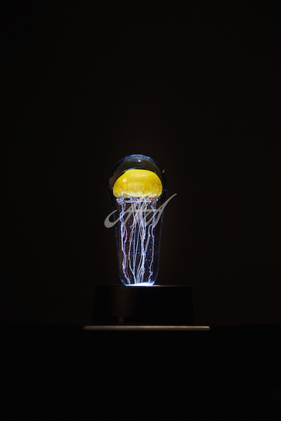 CRO_ Yellow jellyfish black background watermark lores.jpg