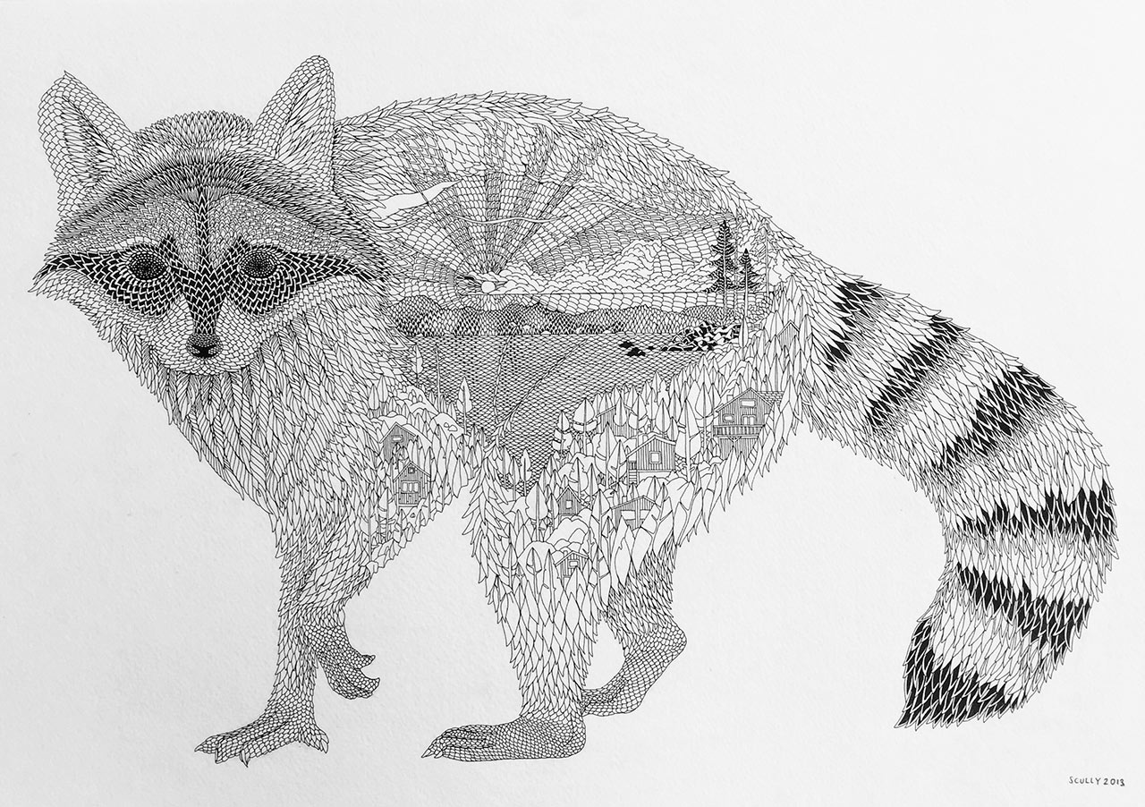 Racoon by Claire Scully