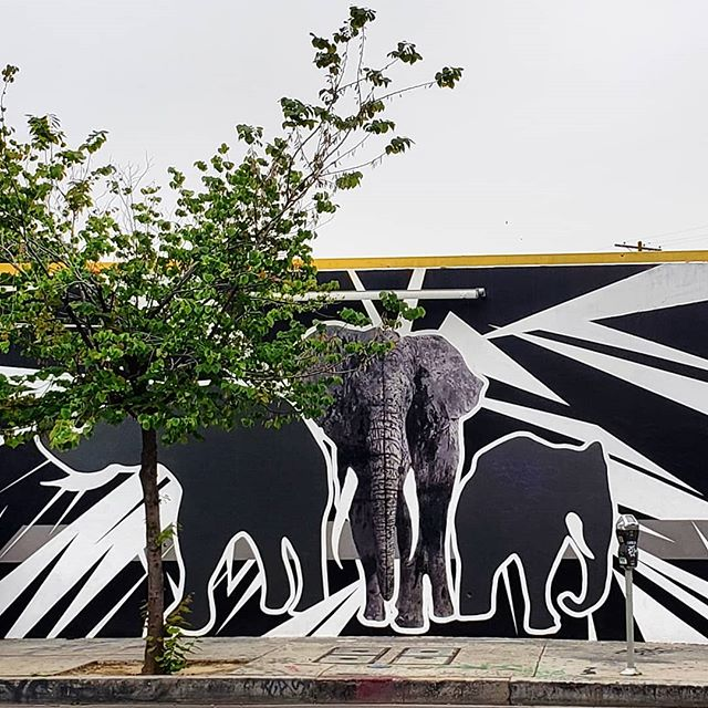 """Every piece of ivory comes from a dead elephant."" Artist Damon Martin partnered with the International Fund for Animal Welfare which helps rescue and protect animals around the world to bring this mural and message to life in the Arts District. . . 🌍 Find it on the map! --  MuralMapLA.com . . #muralmapla #mural #muralart #urbanwalls #urbanart #streetart #artist #art_spotlight #paintthechange #paint #graffiti #streetarteverywhere #streets #losangeles #streetsofla #animalrights #publicspace #publicart #artsforla #beautifyearth elephant #artaroundtheworld #publicspace #losangeles #lastreetart #travel #getoutside #wanderlust"