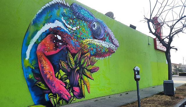This chameleon no longer stands alone on this wall but this photo is too good to pass on. . . . Mural by @djn3ff in Mar Vista off Venice Blvd. 🌍 Find it on the map! --  MuralMapLA.com . . #muralmapla #mural #muralart #urbanwalls #urbanart #streetart #artist #art_spotlight #paintthechange #paint #graffiti #streetarteverywhere #streets #losangeles #streetsofla #neighborhood #community #publicspace #publicart #artsforla #beautifyearth #worldtour #artaroundtheworld #publicspace #losangeles #lastreetart #travel #getoutside #wanderlust