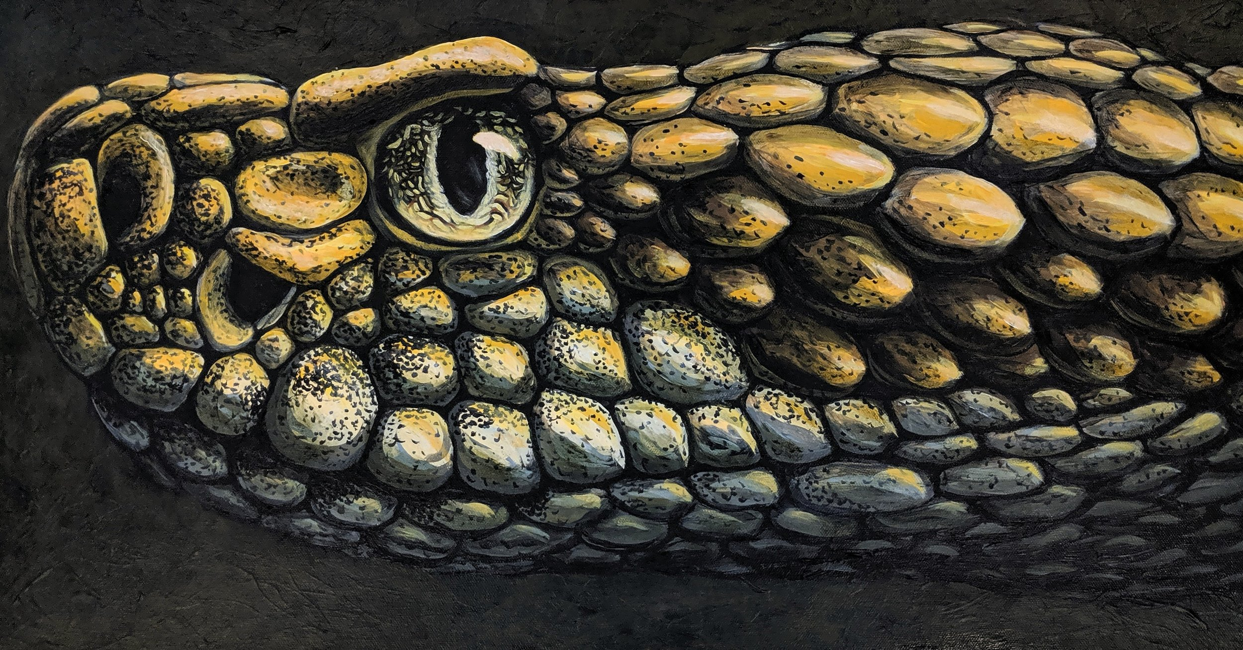 "Crotalus horridus  Timber Rattlesnake Acrylic paint on 30""x15"" canvas"