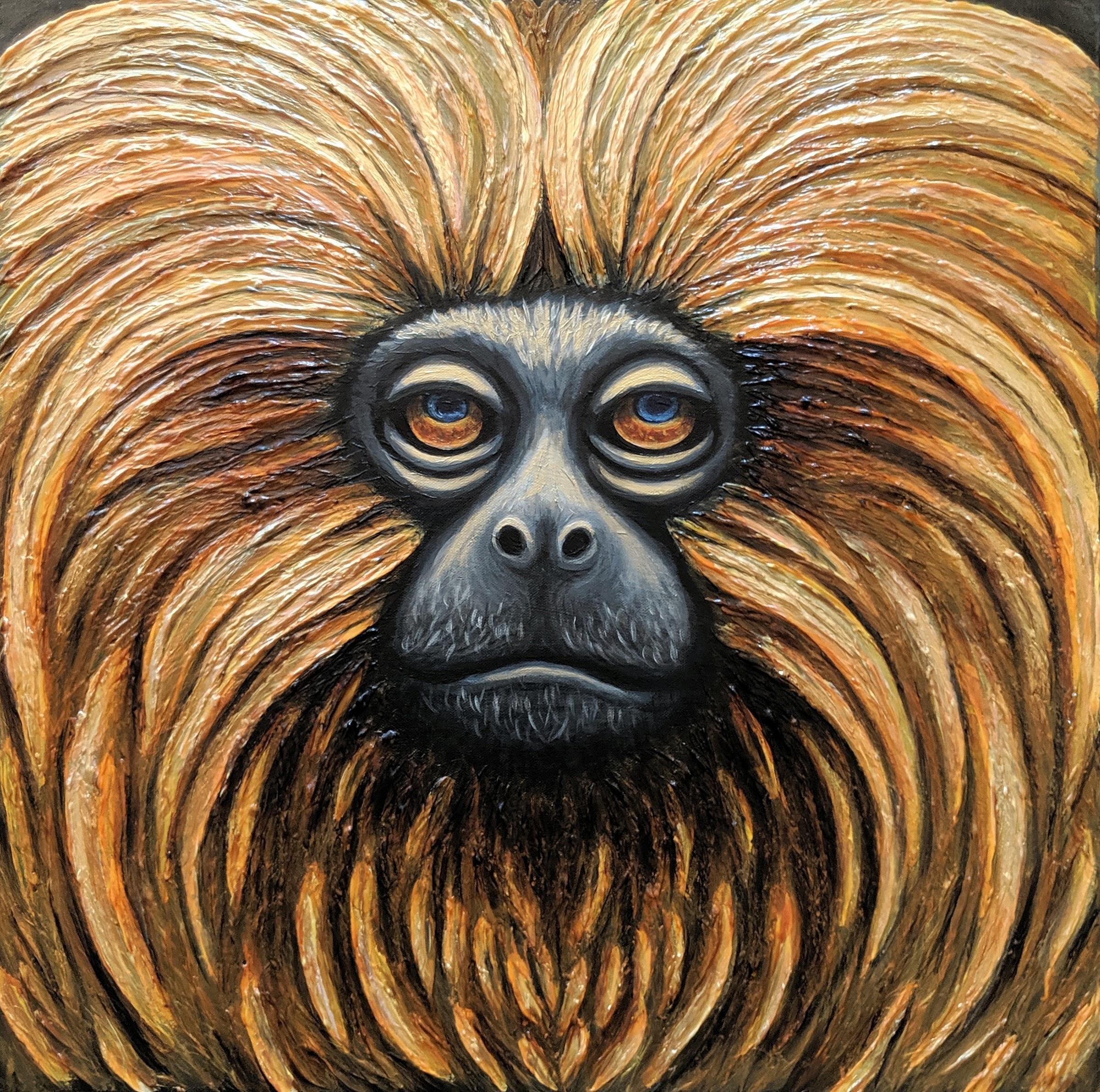 """Leontopithecus rosalia  Golden Lion Tamarin Acrylic paint on 24""""x24"""" canvas"""