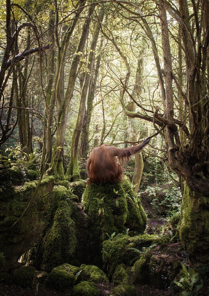 Orangutan Holding Branch