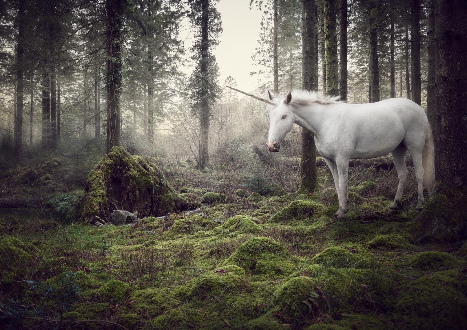 The Last Unicorn 1