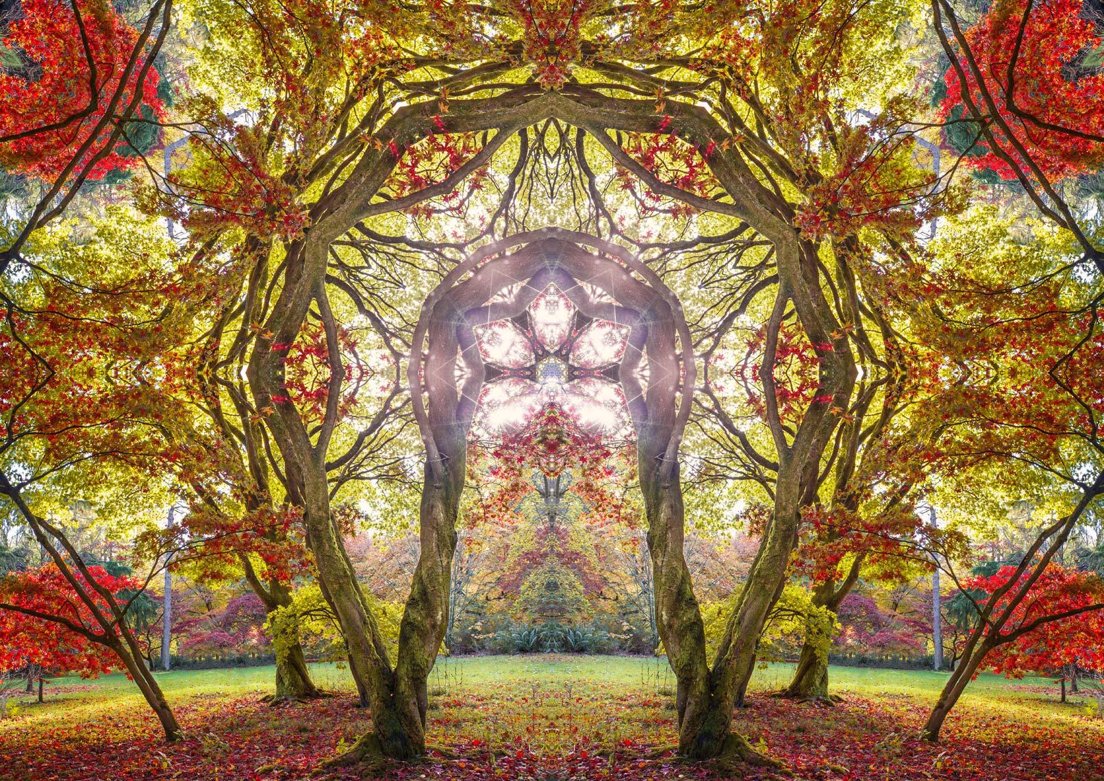 Autumn Portal 7