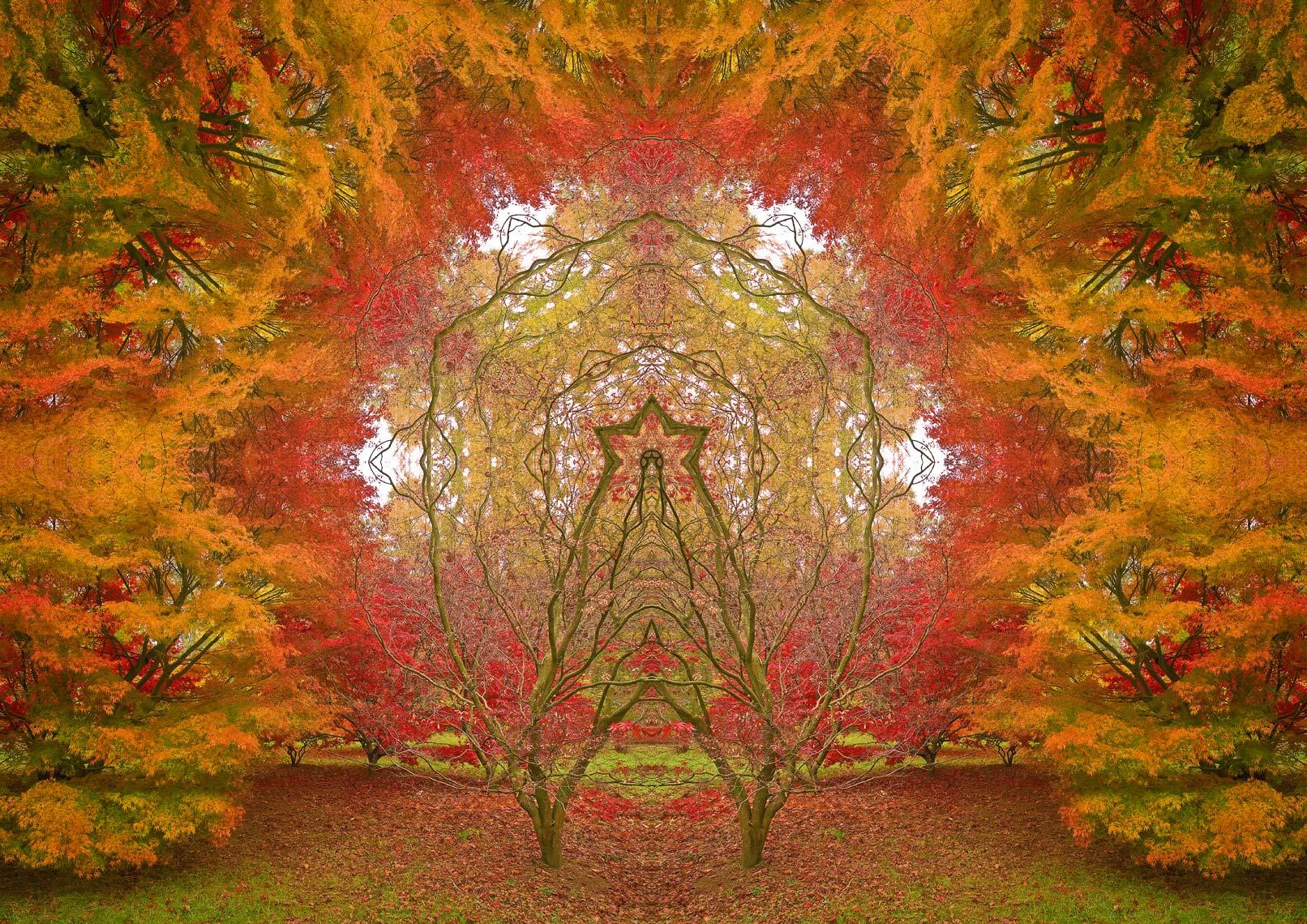 Autumn Portal 8