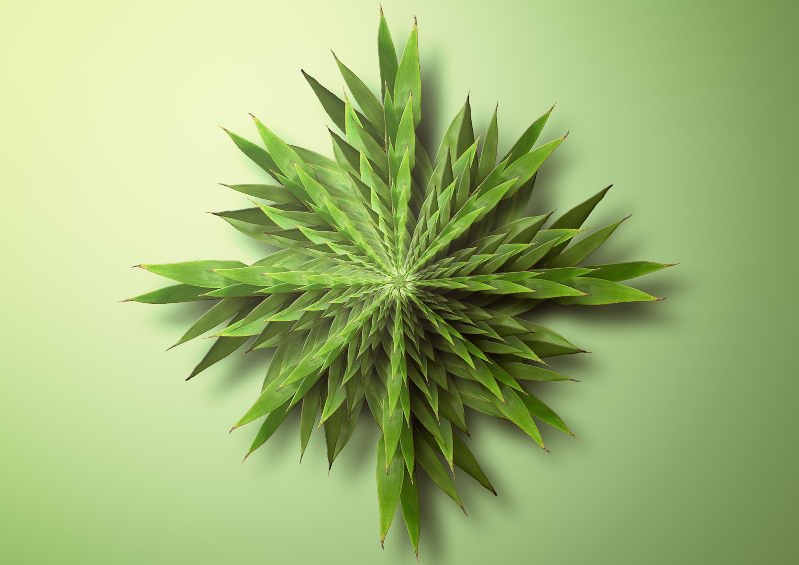 Bamboo Fractal