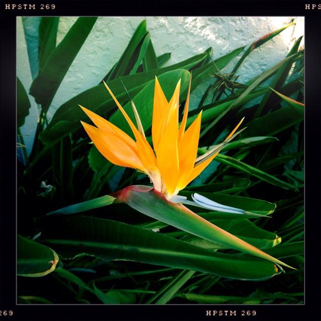 photo-flower.jpg