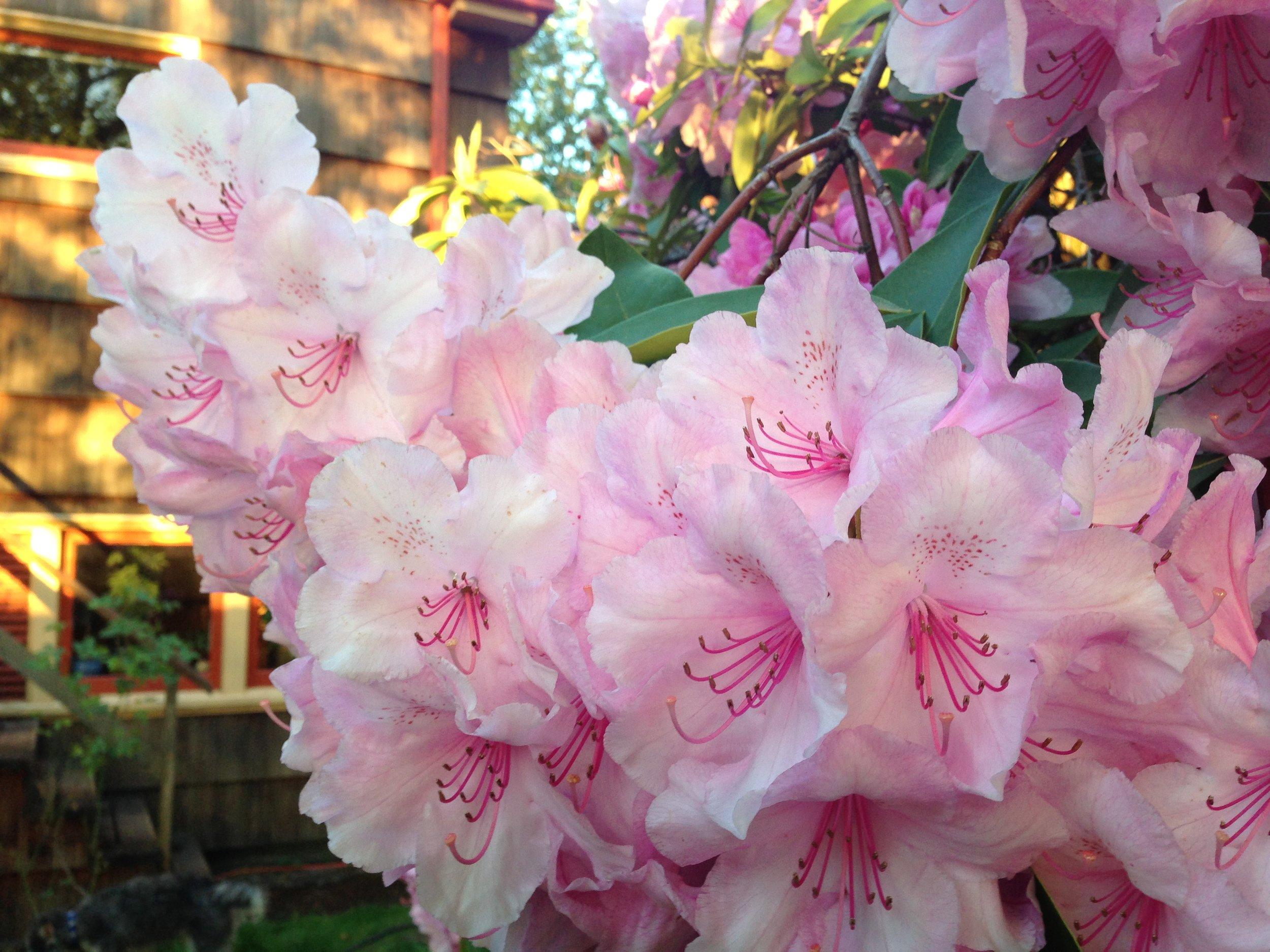photo-flower-2.jpg