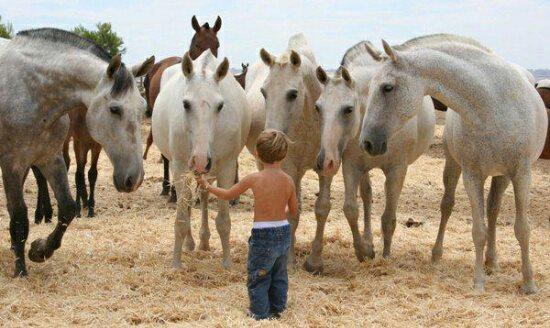 horse-love-kid.jpg