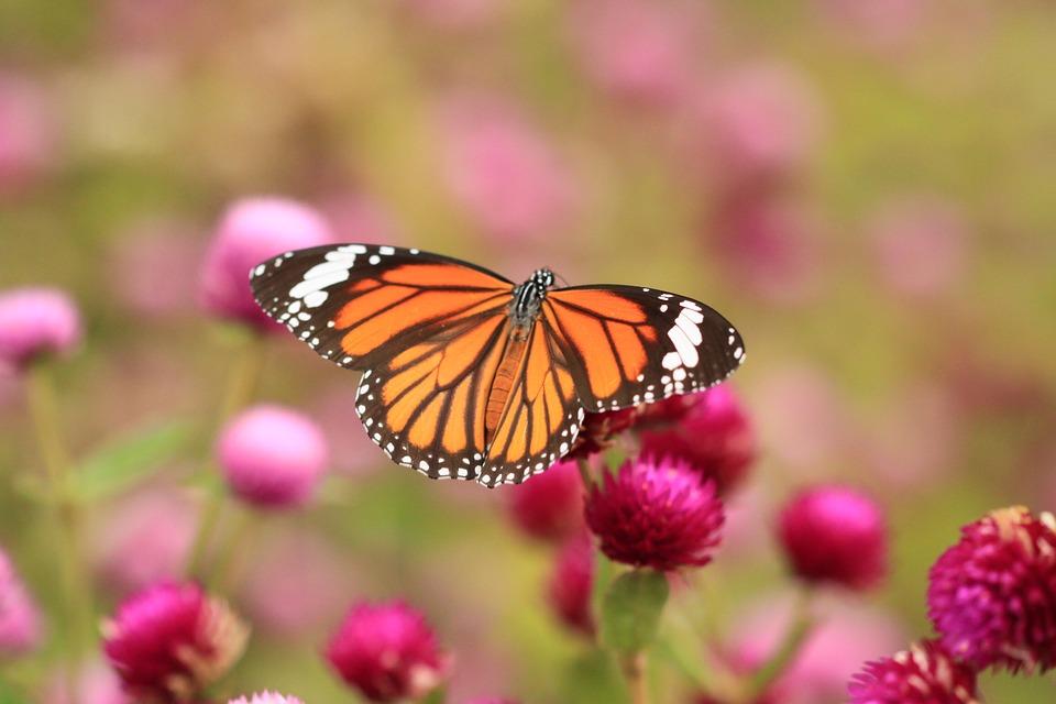 butterfly-1222263_960_720.jpg