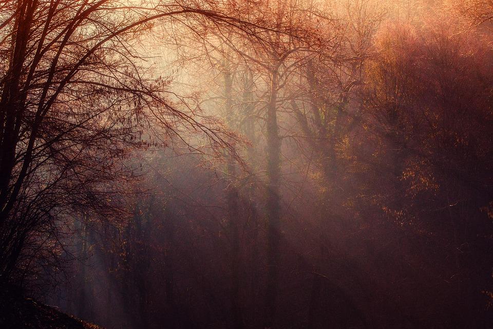 forest-1225983_960_720.jpg